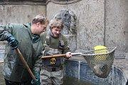Rybí jarmark v Chrudimi