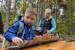 Sazeničku dubu, buku, borovice nebo jedle si mohl zasadit každý.