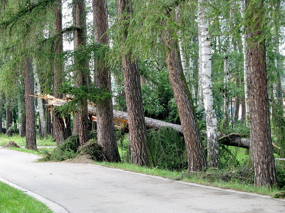 Vichřice zpustošila také arboretum u Hamzovy léčebny v Luži.