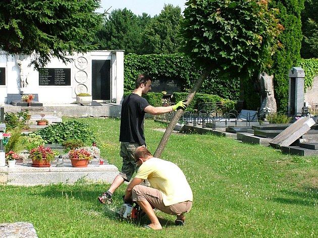 Budoucí úpravě místa válečného pohřebiště muselo ustoupit i několik mladých stromků.