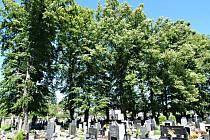 Lípy na katolickém hřbitově v Proseči, červen 2009