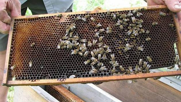 Návštěvníci se na včelí stezce dozví o životu včel.