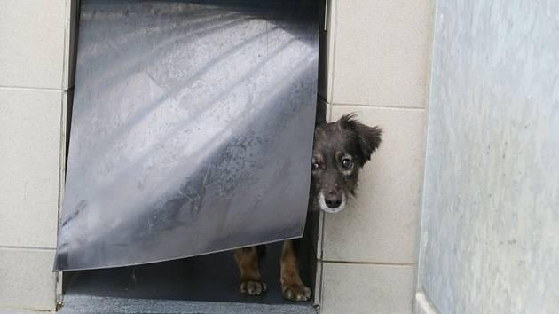 V domku v Přestavlkách žili psi v otřesných podmínkách