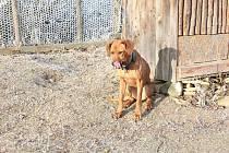 Petardy psy děsí, ztratila se Sára