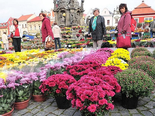 Trhy na Resselově náměstí se v těchto dnech topí v záplavě chryzantém všech barev..