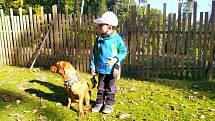 Heavenranch v Srbcích u Luže pomáhá týraným psům, nachází jim nové domovy. Podívejte se na snímky veselých tvorů, kterým se změnil život k lepšímu.