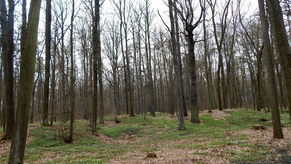 Dvakačovický les.