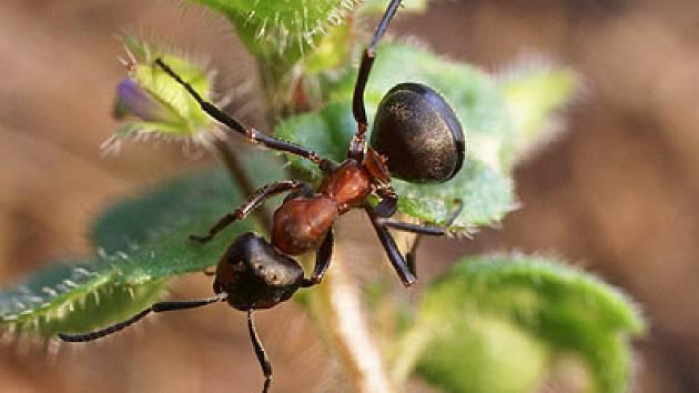 Mravenci a jejich svět.