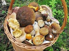 Nejnovější úlovek hlineckého houbaře