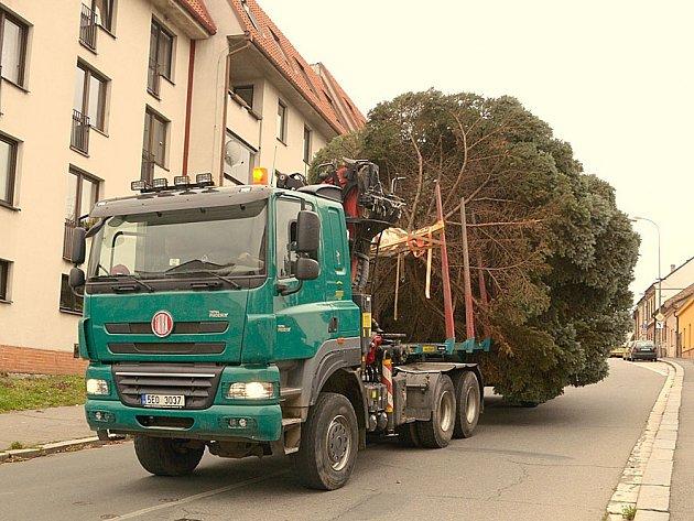 Podvalník se stříbrným smrkem přijížděl do centra po Novoměstské ulici. Usazený a ozdobený strom se naplno rozzáří v neděli 30. listopadu odpoledne.