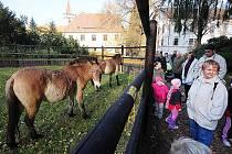 Slatiňanští přivítali doma koně Převalského.