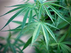 Péče o marihuanu vyjde draho.