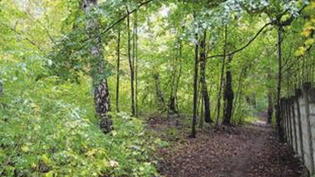 Džungle, prales, křoviska. Změní se park v reprezentativní kout města?