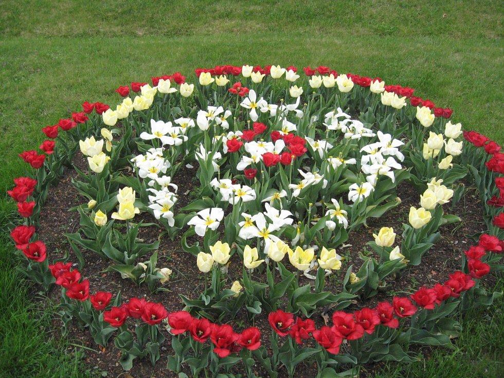 Tulipán, květina lásky a slávy.