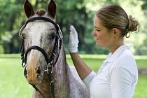 Který poník je ten nej? Rozhodnutí padne v neděli 14. června ve Slatiňanech.