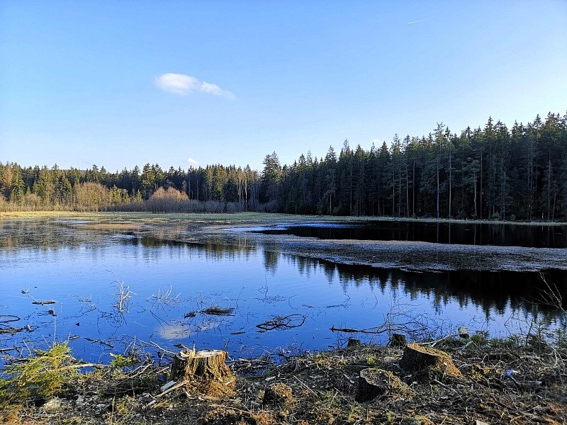 Rybník Malý černý.