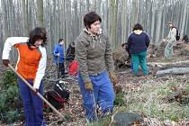 Studenti sázejí v přírodní rezervaci jedle. Do Lovětínské rokle se zase vrací život.