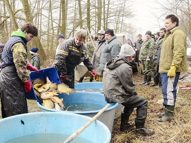 Výlov rybníku Práchovna, který se nachází mezi Morašicemi a Lány, byl v režii rybářů ze 2. místní organizace ČRS Chrudim.