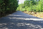 Lesní cesty pomohou zadržet vodu v krajině