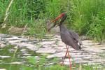 Ochránci přírody uspořádali procházku spojenou s poznáváním přírody kolem Bítovan.