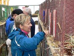 Výstava v Rabštejnské Lhotě nabídla stovky ušáků i holubů. Majitelé se však shodují, že jejich chov je spíše milovaný koníček