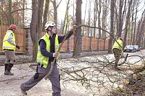 Vetché stromy musí pryč, Kaštanku čeká omlazení.