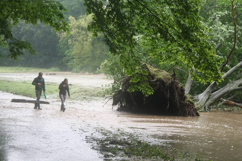 Povodeň vyvrátila i obří strom. Rozvodněný Podolský Potok poté spláchl i Heřmanův Městec. Nakonec se nepotvrdilo, že by byla protržená hráz Zámeckého rybníka. Ten velkou vodu ustál. Podolský potok je obyčejně malinkatým potůčkem s troškou vody. Teď vyplav