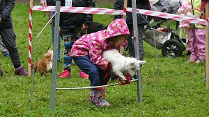 Městský park patřil psí soutěži