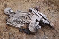 Jedna z nalezených koster.