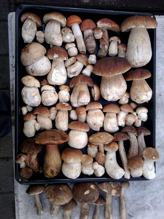 Redakci tentokrát nejvíc zaujaly úlovky Věry Bláhové ze Slatiňan, která v lesích u Nové Vsi u Nasavrk našla přes letošní dosavadní houbařskou bídu opravdovou všehochuť.