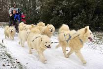 Den severských psů v Heřmanově Městci