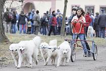 Musheři se spřežením samojedů tradičně vozili děti na vozítku v heřmanoměsteckém parku.