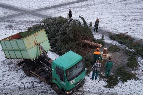 Pokácený strom na Resselově náměstí