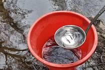 Slatiňanští rybáři do řeky Chrudimky za víkend vysadí 10 000 kusů plůdku. Přenos rybiček probíhá z kbelíku naběračkou jen po pár kusech.