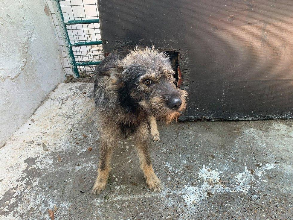 Rumunští psi byli odsouzeni na smrt, teď už jsou už v bezpečí východočeského útulku