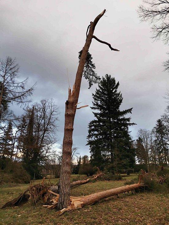 Útok orkánu Sabine v parku Státního zámku ve Slatiňanech nepřežily  tři nádherné borovice lesní, jeden smrk a poškozen byl i jeden habr.