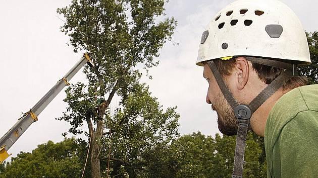 Stromy u náhonu byly vysoké 34 metrů a musely být pokáceny metodou postupného odstraňování dřeva z vrcholu.