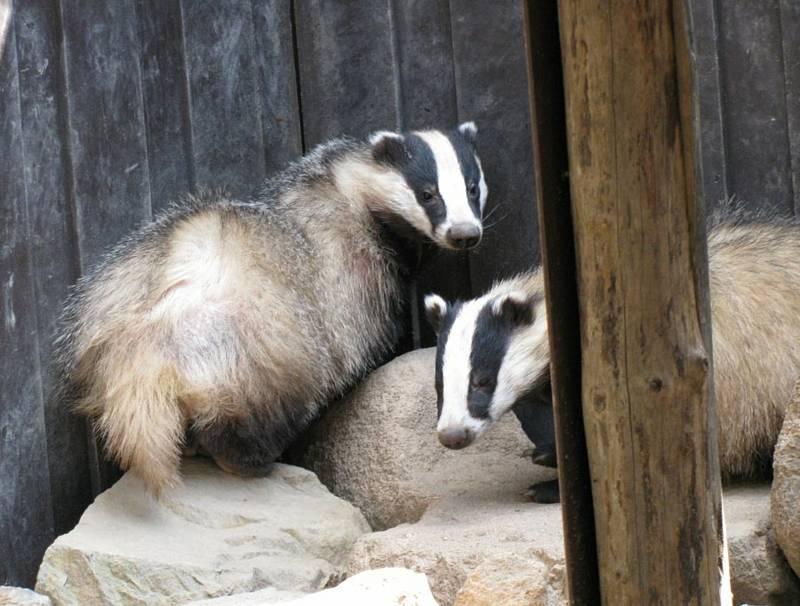 Tato zvířata už zůstanou v Záchranné stanici a ekocentru Pasíčka napořád, jsou trvale handicapovaná. Pomoci jim může virtuální běh, který potrvá do 10. října.