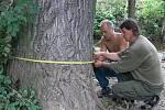 Na břehu zpola vyschlého potoka se lidé přeli o vlastnictví každého jednotlivého stromu. Přes počáteční neshody se nakonec všichni dobrali přijatelného řešení.