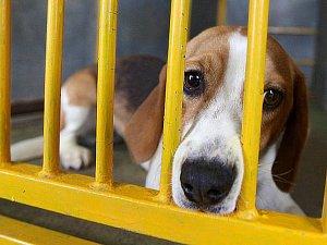 Odchycených psů přibývá,  tuláka odhalí registrační karta