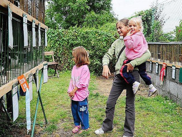 Z chovatelské výstavy drůbeže a drobných hospodářských zvířat ve Slatiňanech.