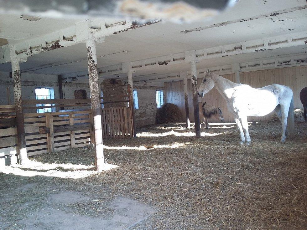 Koňská oáza