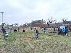 Desítky mladých stromků oživily stárnoucí sad.