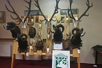 V Nasavrkách je výstava trofejí