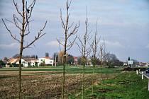 Mezi stromy bude kostel vidět, v aleji je mezera