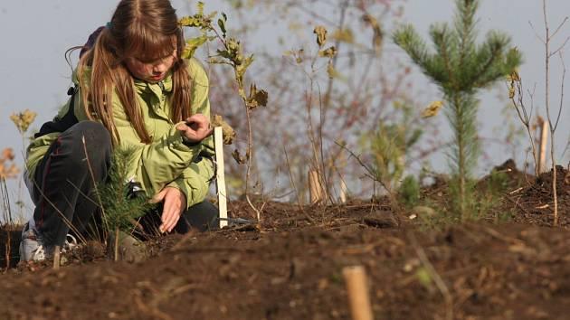 V Libušině údolí se ujaly víc jak dvě třetiny nově vysázených stromků