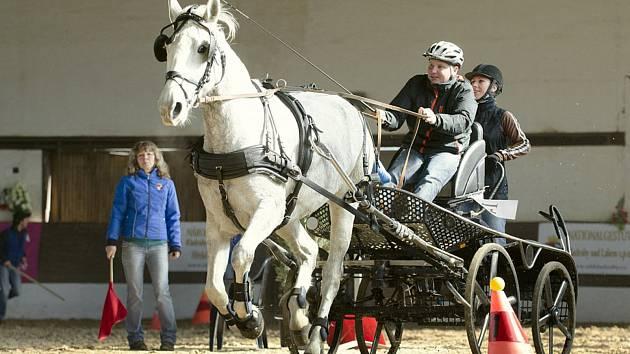 Koně a jezdci se představí v hale.