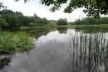 Rybník Velká Kamenice má bohaté litorály, mělká příbřežní pásma, která využívají především vzácné druhy vodních ptáků. Foto: