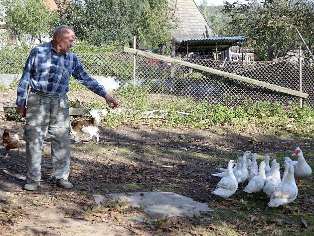 Rudolf Nešetřil z Kutřína prozatím chov domácího zvířectva nevzdává, dvorkem se mu prohání i hejno kachen.