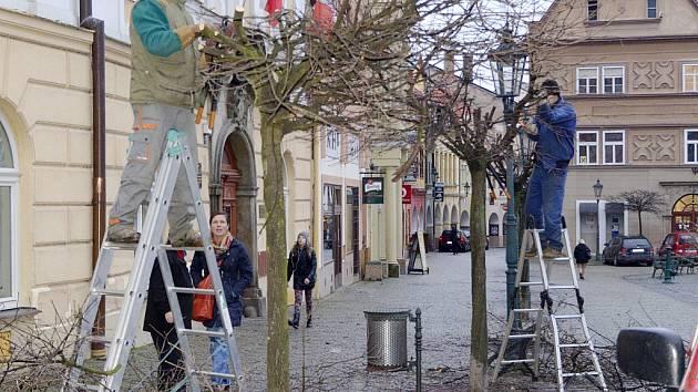 Omlazovací řez na stromech rostoucích po obvodu chrudimského Resselova náměstí.